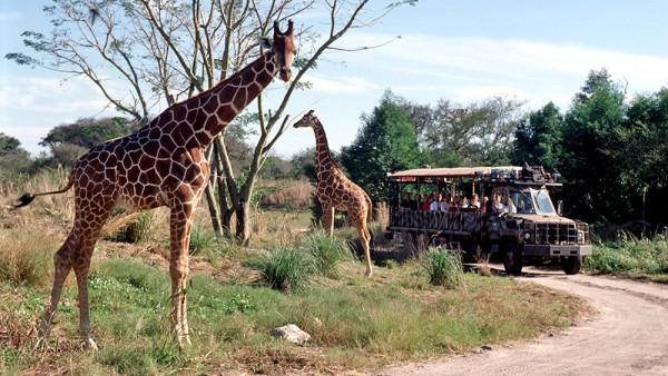 Resultado de imagem para girafa animal kingdom