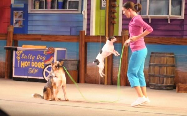013-Pets-Ahoy-at-SeaWorld
