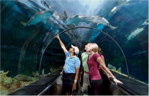 013-SeaWorld-SharkEncounter