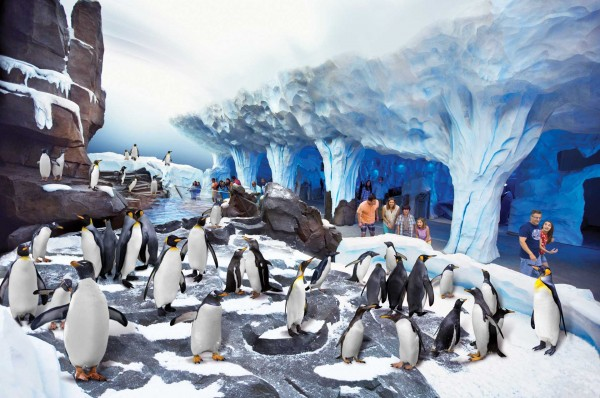 013-SeaWorld_Orlandos_Antartica_Empire_of_the_Penguin_penguins_exhibit_Seafun.com