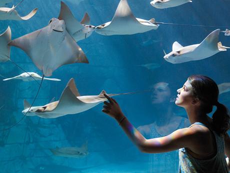 Manta_Aquarium_Girl460x345