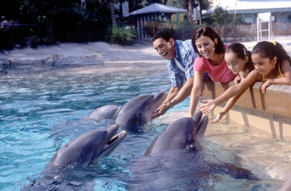 dolphin-cove-sea-world
