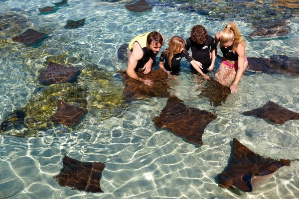 Discovery Cove-Ray_Lagoon