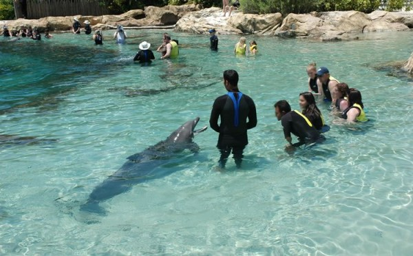 43916a2d2942b Discovery Cove-dolphin lagoon